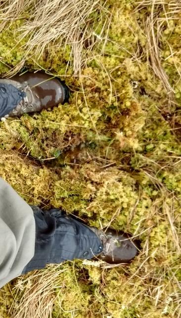 7 Moss underfoot
