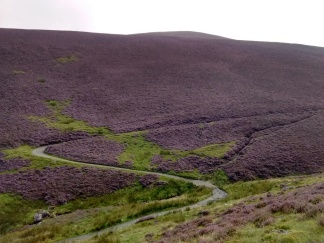 18.6 Heather on Little Calva