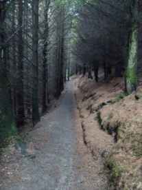18.7 Forest Path