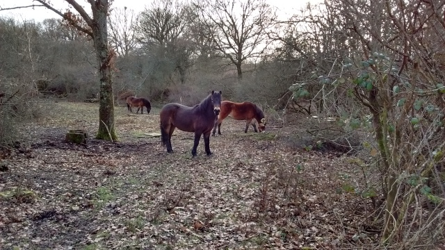 25-9-ponies-on-the-common